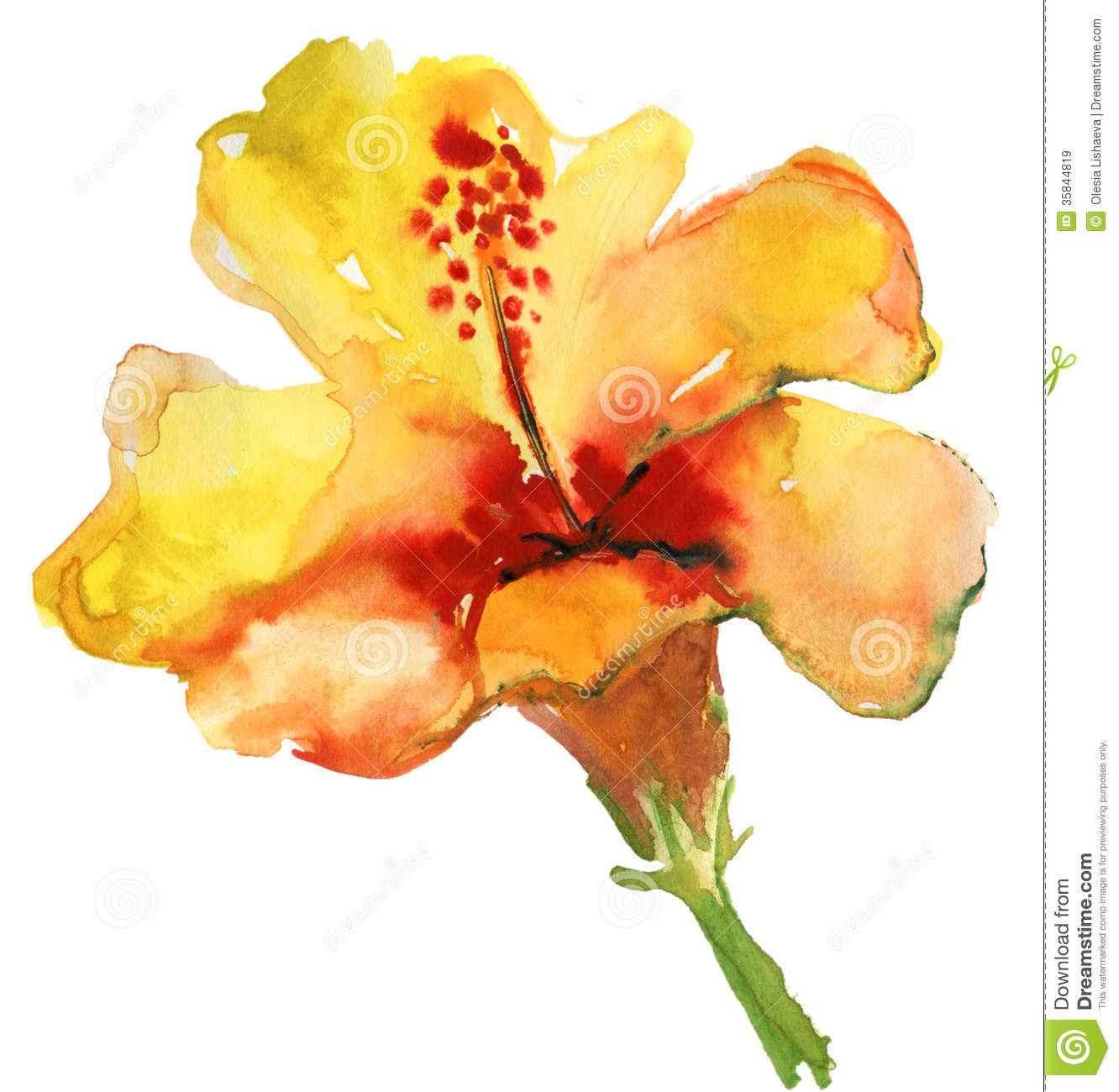 Hibiscus flower clipart image hibiscus flower - Watercolor Yellow Hibiscus Royalty Free Stock Images Image 35844819 Yellow Hibiscushibiscus Flowerstropical