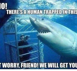 Funny Quotes About Sharks Misunderstood Shark Sharks Funny Funny Animal Memes