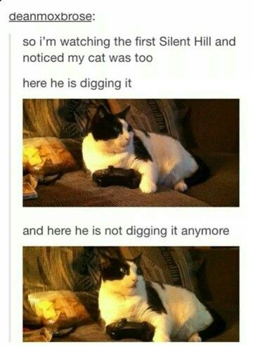 Even Cats Are Scared Of Silent Hill Cute Funny Animals Cats Funny Pictures