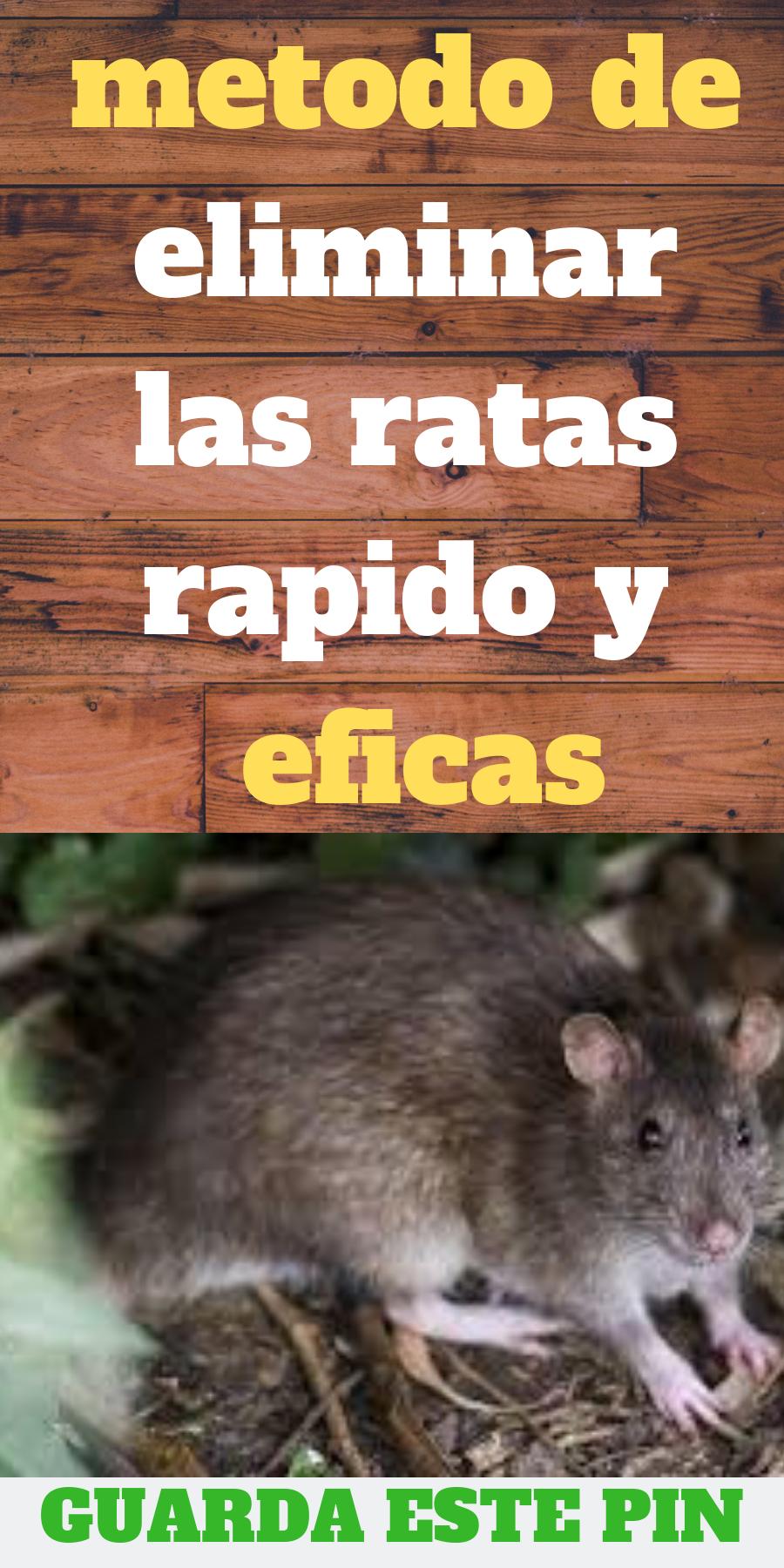 Como Acabar Con Las Ratas En El Jardin Como Eliminar Ratones En El Jardin Como Eliminar Ratones Como