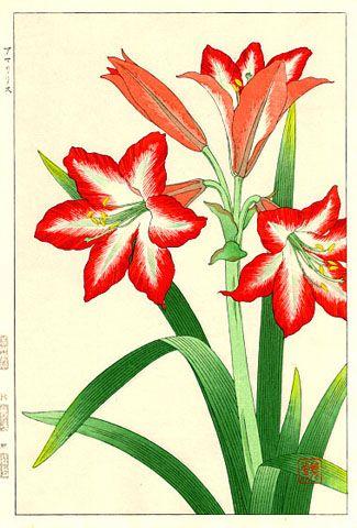 Amaryllis, Red  by Kawarazaki Shodo  (published by Unsodo)