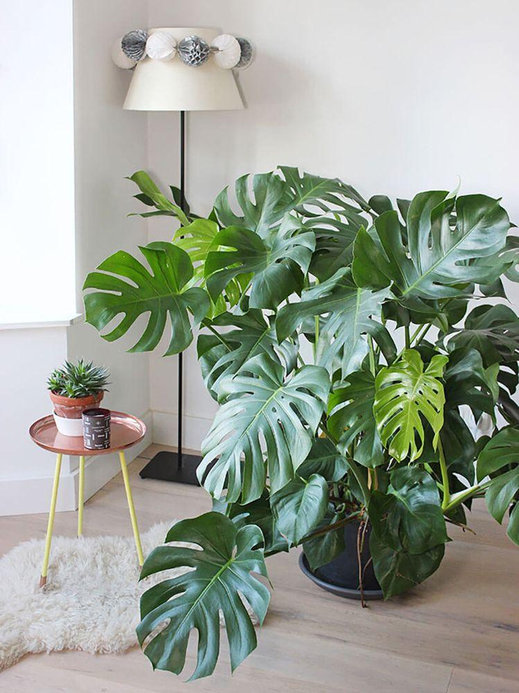 Le piante d'appartamento più belle per arredare la casa