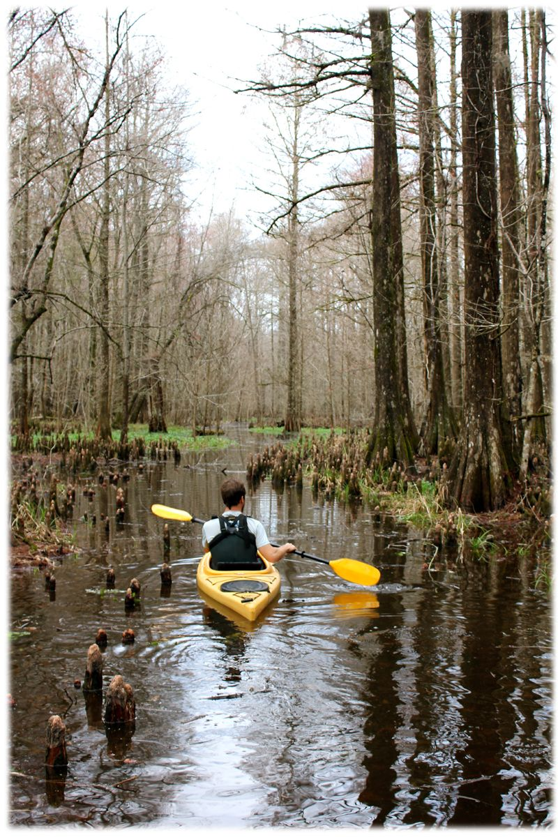 Explore a whole other world- Join us on the Cypress swamp kayak tour ...