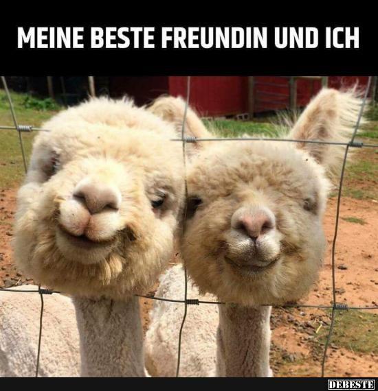 Besten Bilder, Videos und Sprüche und es kommen täglich neue lustige Facebook Bilder auf DEBESTE.DE. Hier werden täglich Witze und Sprüche gepostet! #stuffedanimals