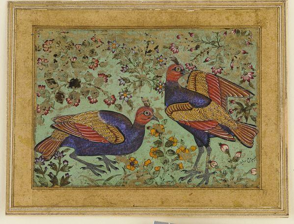 Two pheasants-1620