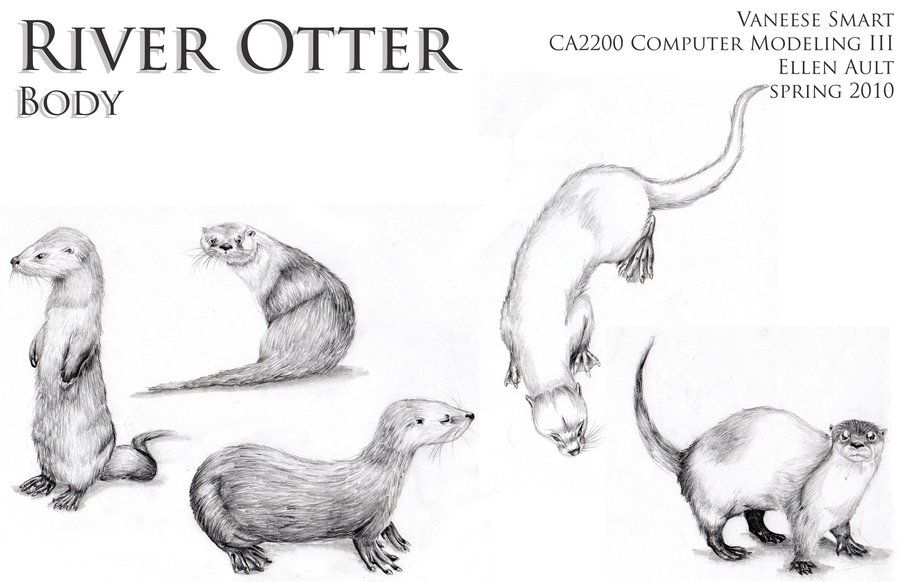 cute otter illustration - Google Search | Glass engraving | Pinterest