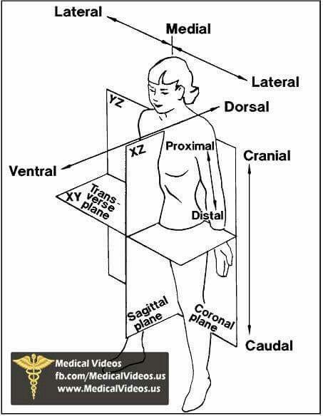 Diagram | ATC | Pinterest | Anatomía, Medicina y Enfermería
