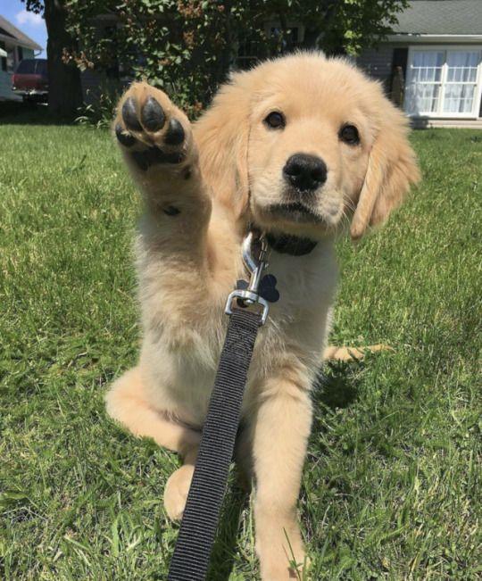 Pin Von Cacilia Boidoll Auf Hunde Puppies Collie Puppies Und
