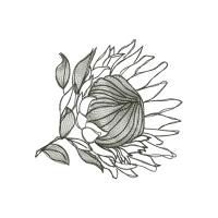 Protea Sketches Flower Drawing Protea Art Protea Flower