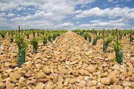 """Les vignobles de """"Chateauneuf du pape"""" Dégustations, wine tasting"""