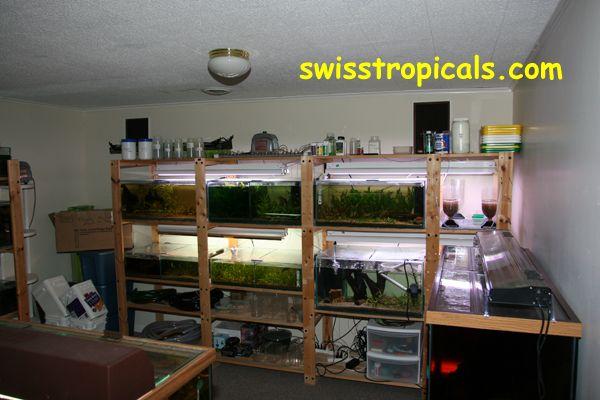 Swiss Tropicals Fishroom Fishrooms Pinterest Glass