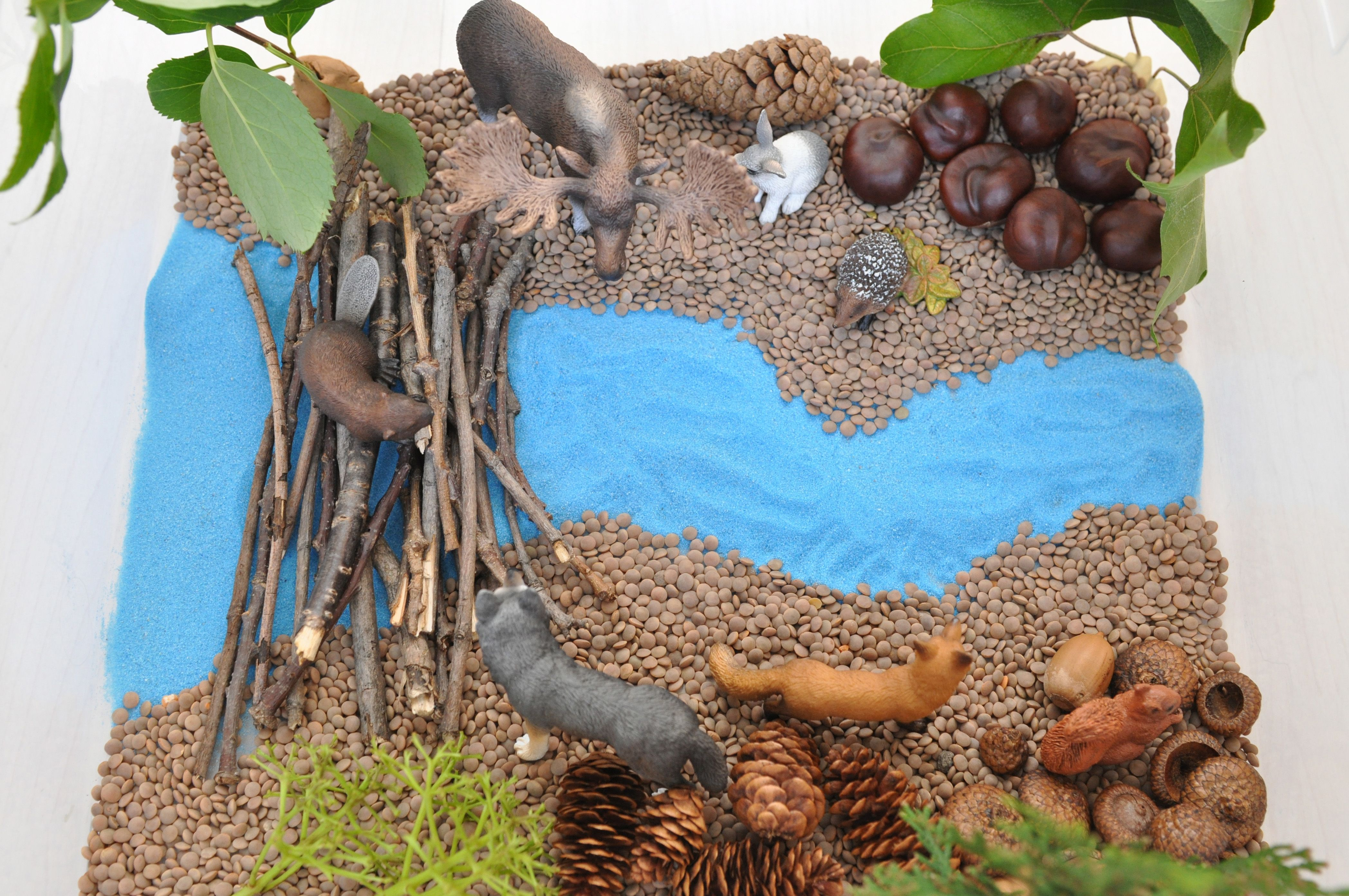 make a beaver dam out of sticks and set up a forest with animals around it sensory bin ingredients lentils blue sand sticks chestnuts acorn caps  [ 4192 x 2784 Pixel ]