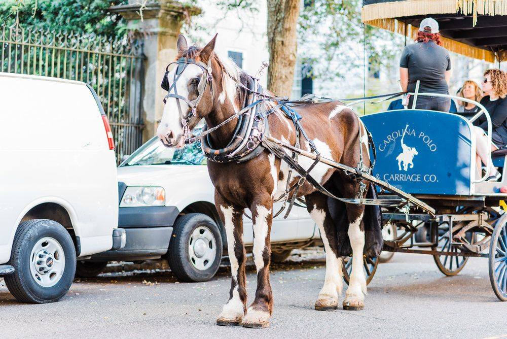 Charleston carriage rides luxury wanderlust with me