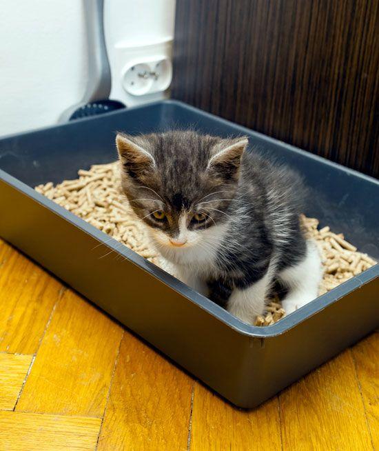 Idea For Alternative Cat Litter Green Homes Cat Litter Natural Cat Litter Cat Training Litter Box
