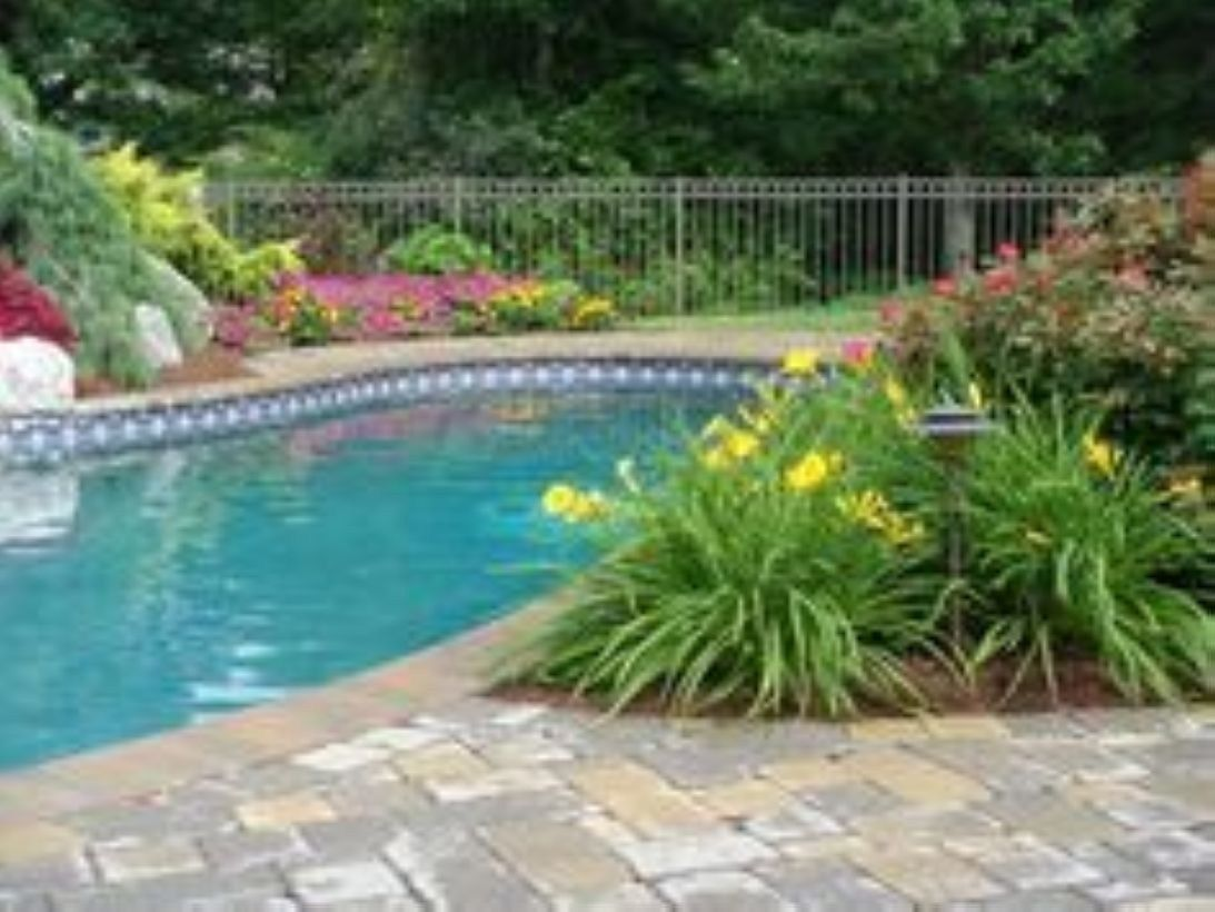 48 Suitable Plants Grow Beside Swimming Pool Plants Around Pool Pool Landscaping Backyard Pool Landscaping
