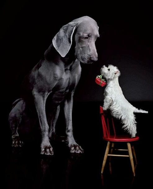 Westie And Great Dane I Love Dogs Dogs Cute Animals