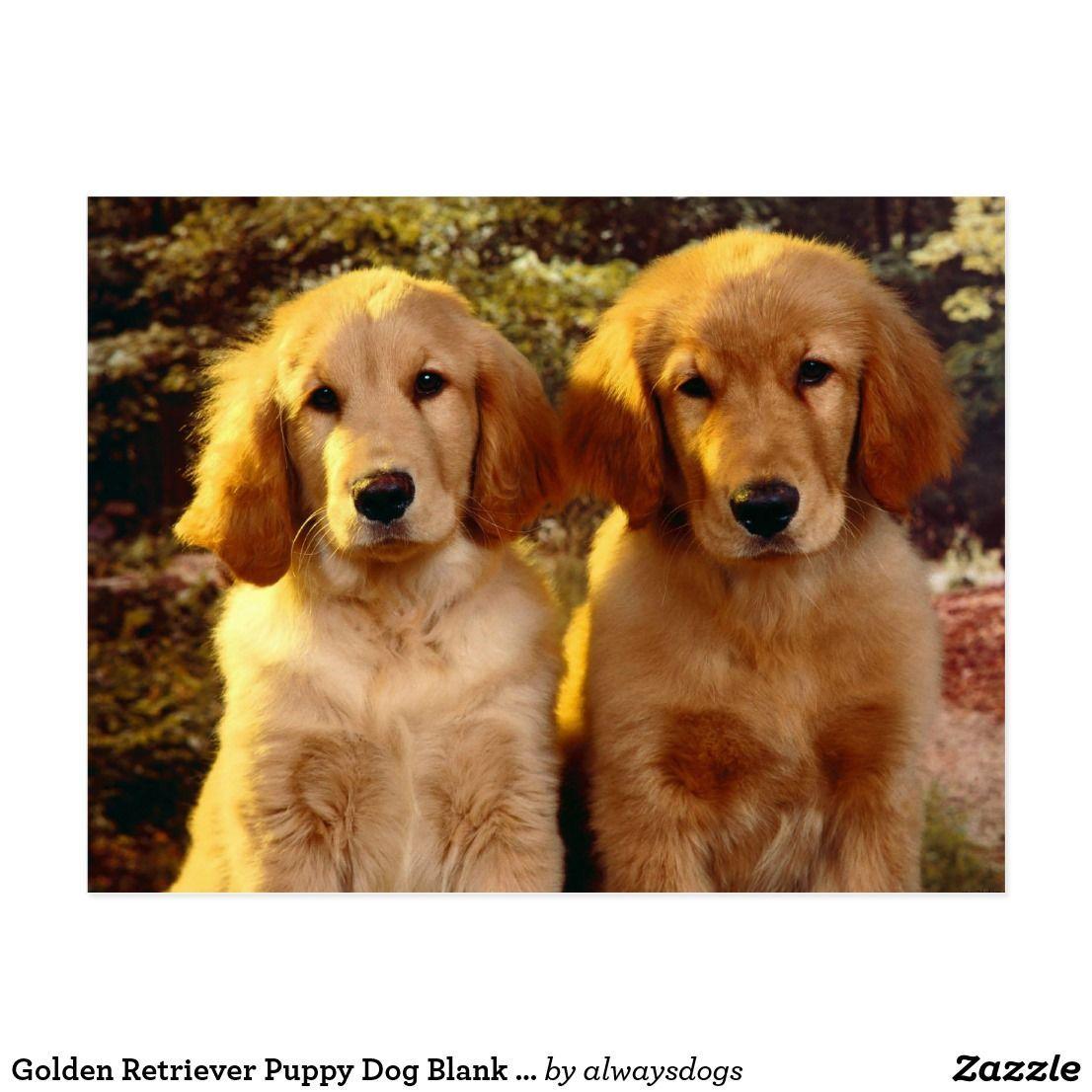 Golden Retriever Puppy Dog Blank Postcard Goldenretriever Dogs