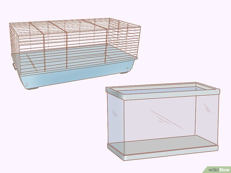 Care for Dwarf Hamsters (With images) Dwarf hamster