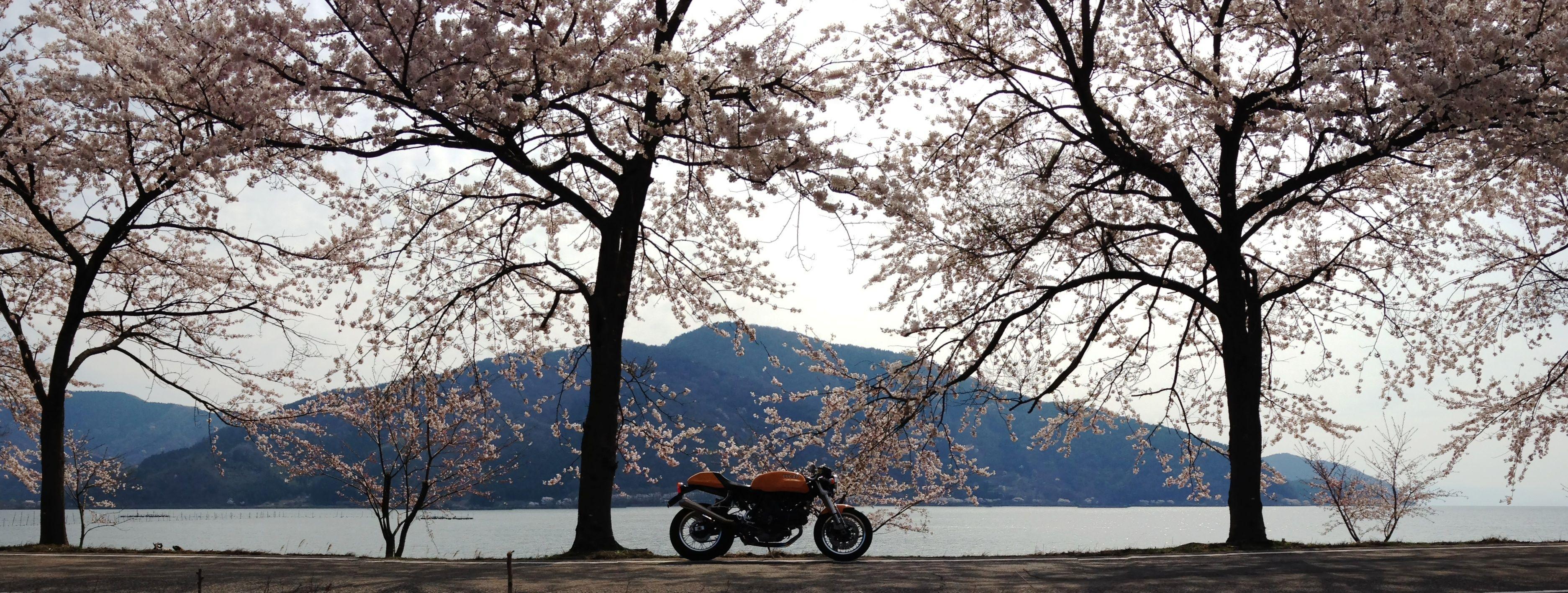 20140411@海津大崎(kaiduosaki)②
