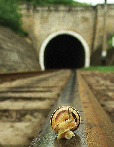 snail on the rails