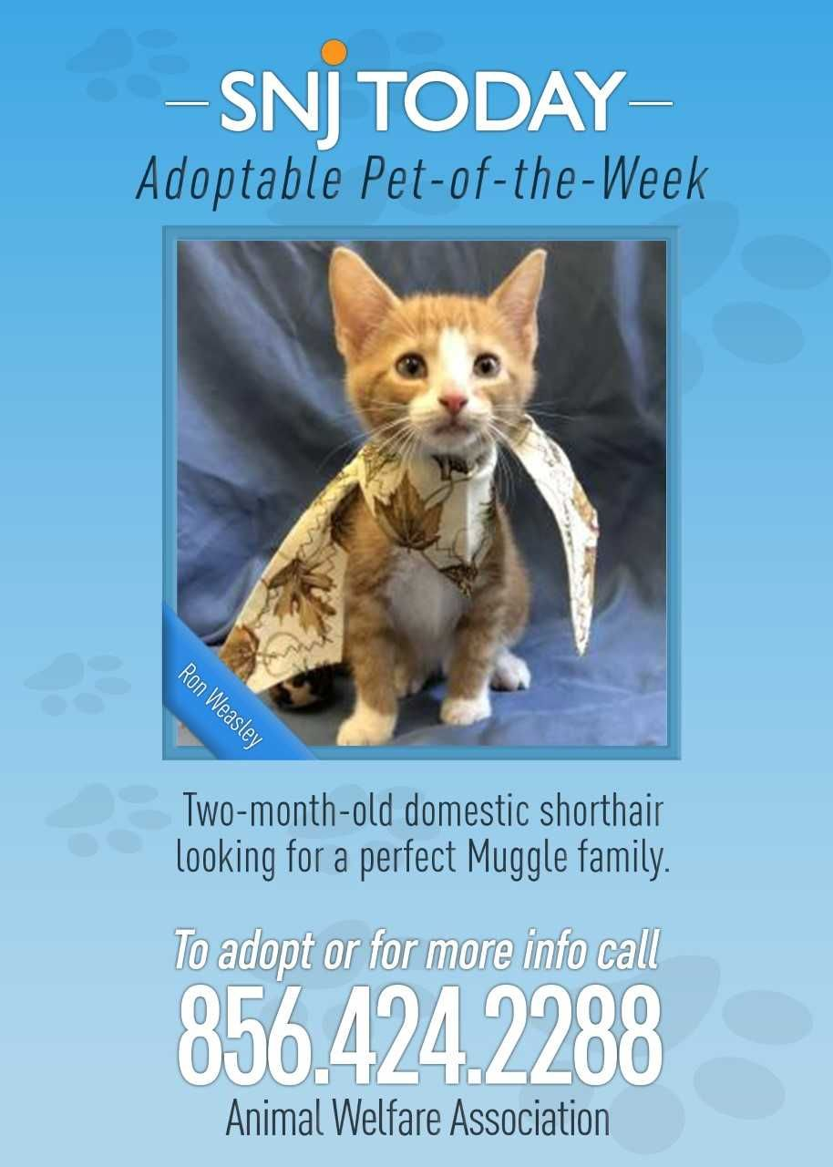 SNJ Today's Adoptable PetoftheWeek is… Ron Weasley! Ron