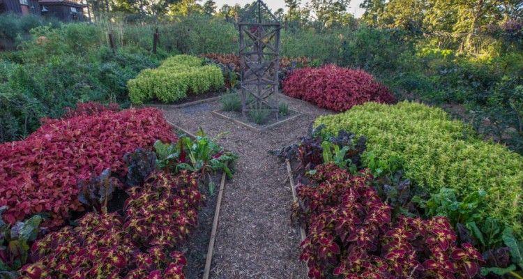Best 10 Edible Landscape Design Ideas | Landscaping Ideas ...