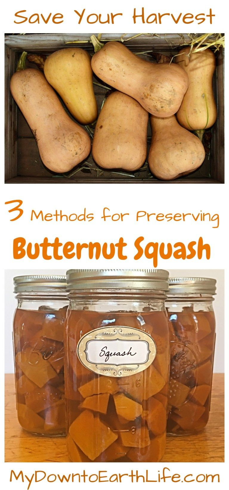How to Preserve Butternut Squash (With images) Frozen