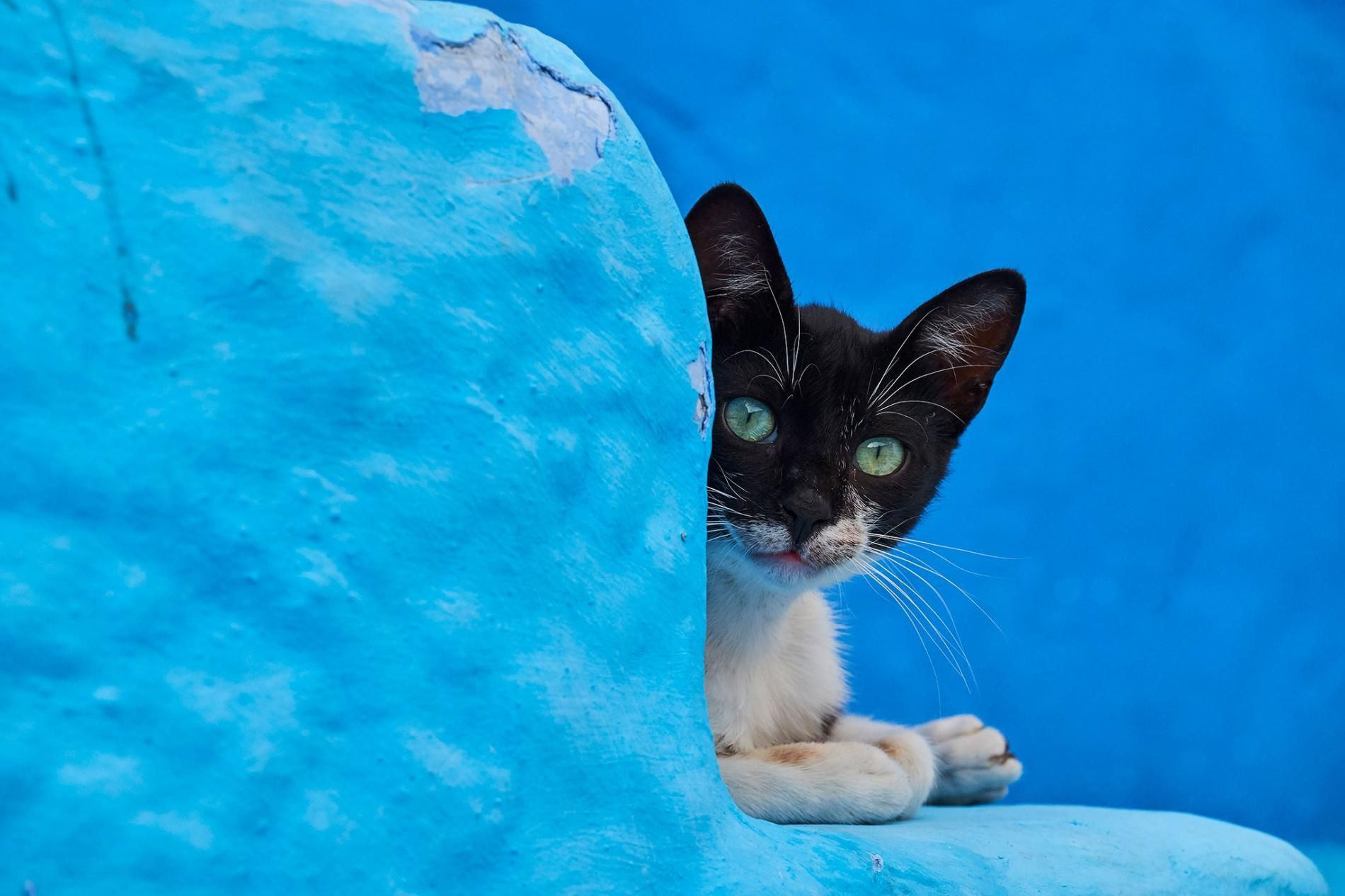See the lives of street cats around the world Cats, Cat