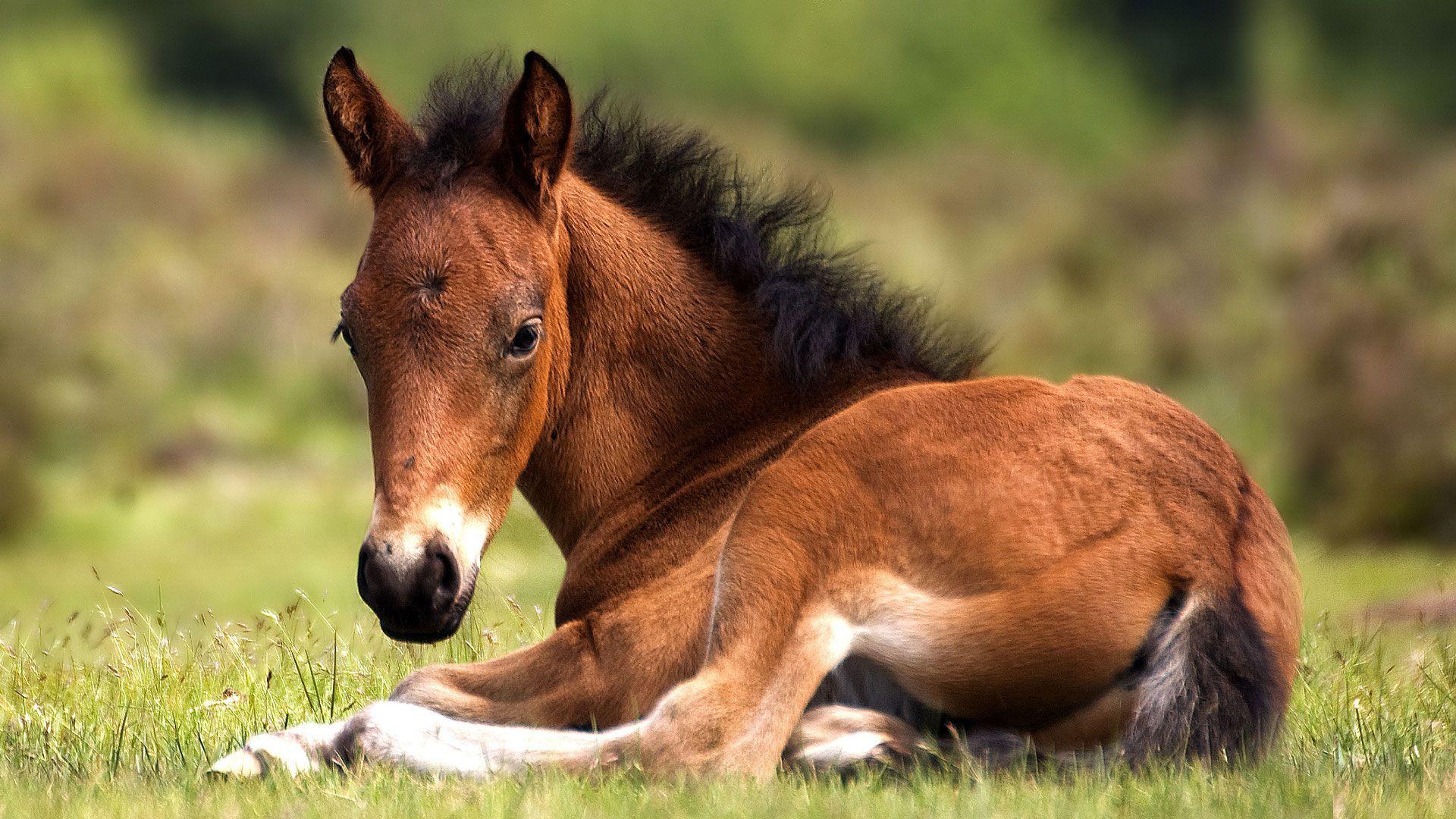 Bébés animaux : 56 animaux et leurs petits | Animaux ...