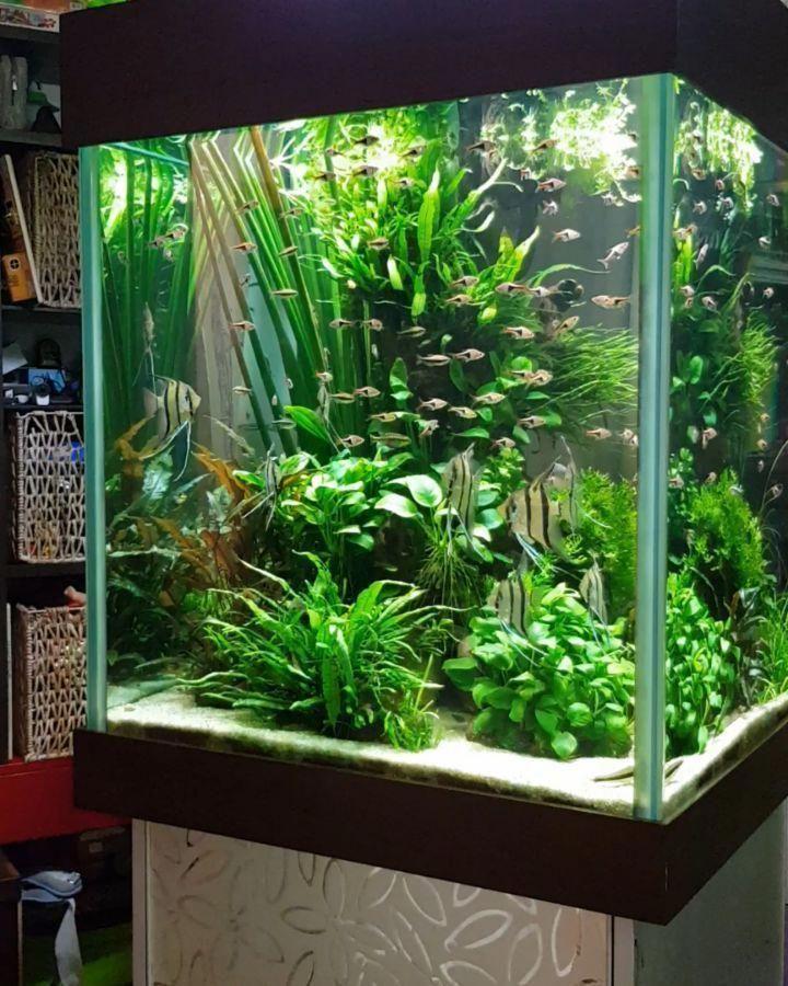 Diy Fish Tank Decorations Themes Aquascaping Fresh Water Decor Ideas Small Aquascaping Homemade Creative Aquasc Diy Fish Tank Aquarium Fresh Water Fish Tank