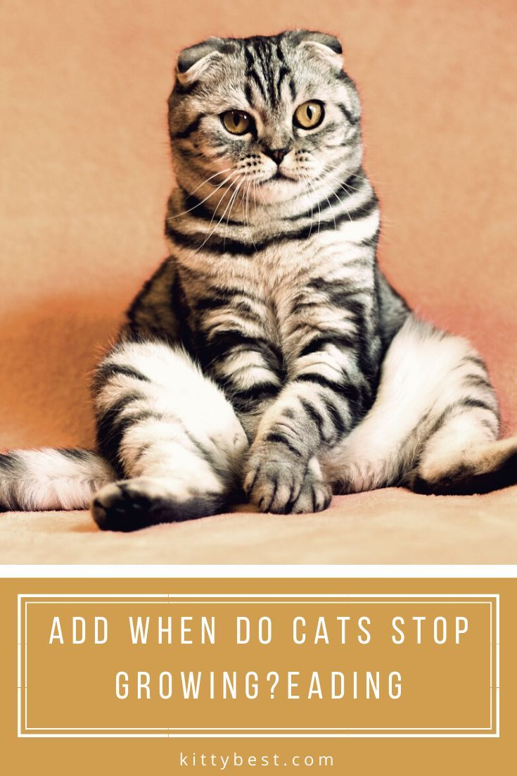 When Do Cats Stop Growing? [A Complete Guide For 2020