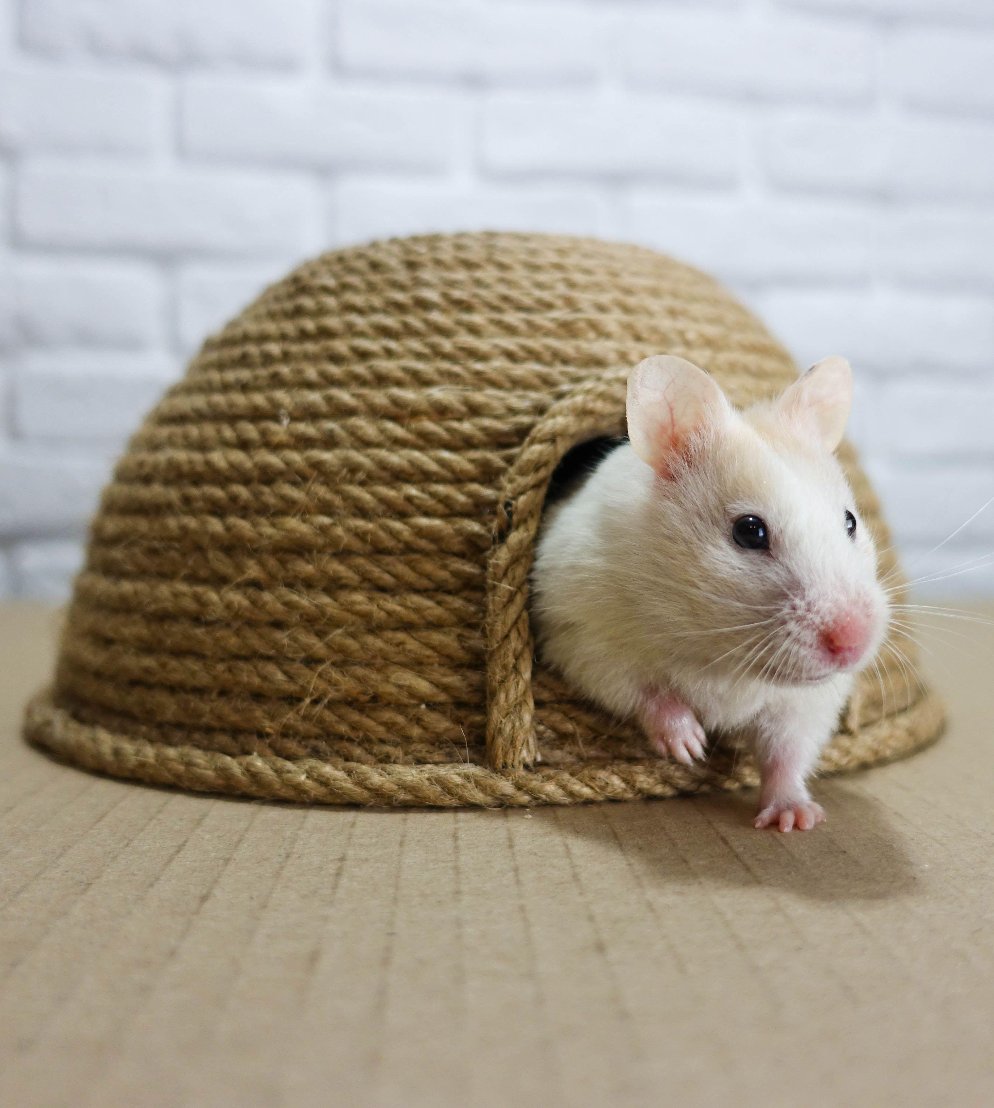 How To Make A Jute Hamster House Hamster Habitat Hamster Bedding Cute Hamsters