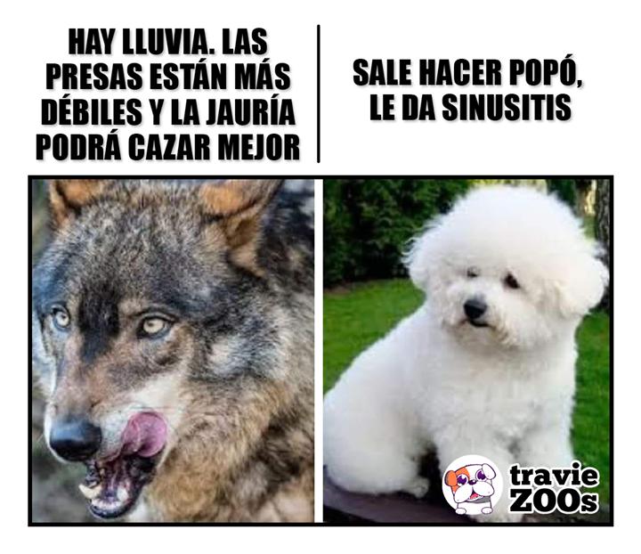 Como Han Cambiado En 2020 Memes Perros Perros Perros Lindos