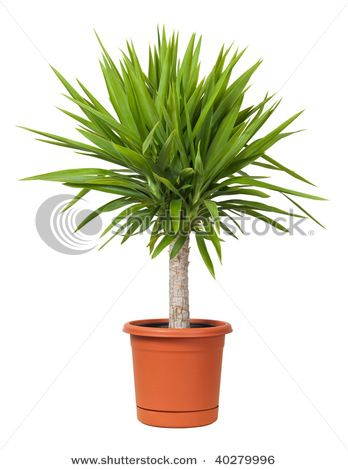 Would love plants like this but my car eats them :(