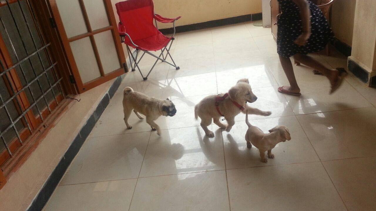 Pet Hostel & Dog sitter near me Dog daycare, Dog sitters