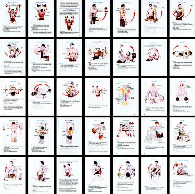 Exercise for bodybuilding (PHOTO) | sdasdas | Ejercicio, Salud y ...