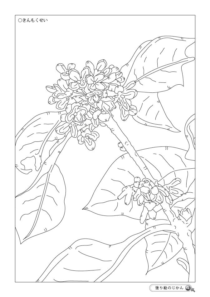 10月の花ぬりえ 塗り絵のじかん 2020 塗り絵 秋 塗り絵 無料 10月の花