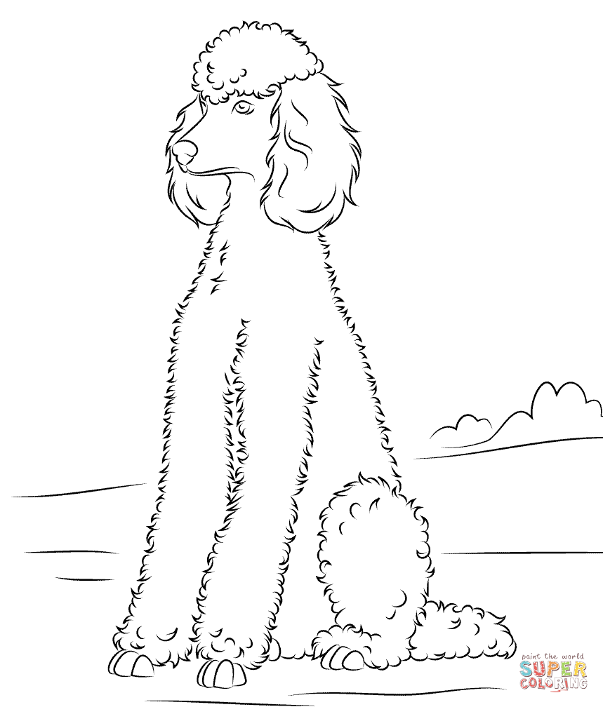 Poodle | Super Coloring | Poodle Patterns | Pinterest