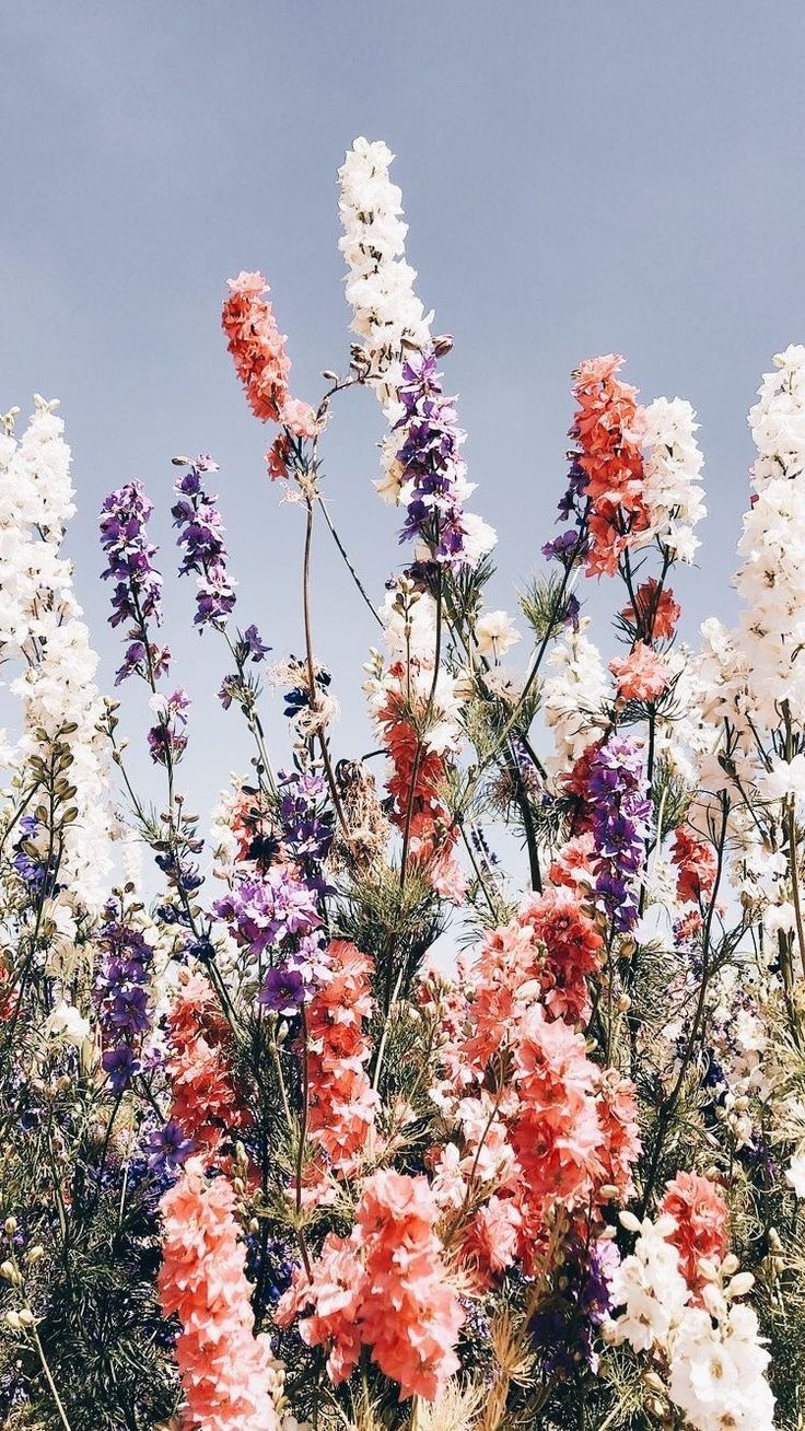 Traumhafte Wildblumen - Easy flowers