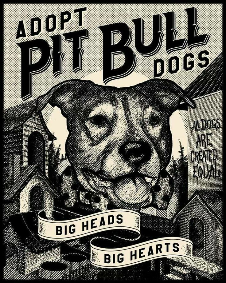 Adopt Pit Bull Dogs. Big Heads Big Heads. All dogs are Created Equal.