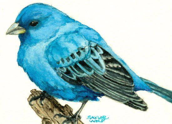 d734bae458e Indigo Bunting Watercolor Art Print of Bird by SaylorWolfWorks ...