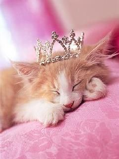 Image result for sleeping cat queen with crown images