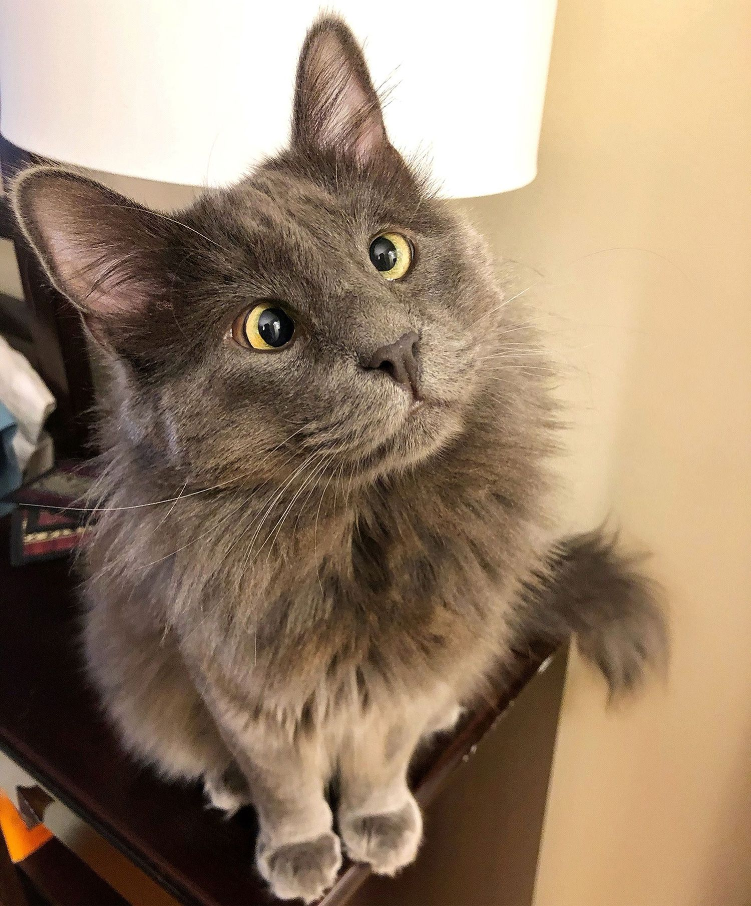 CrossEyed Rescue Cat Belarus Has His Sights Set on