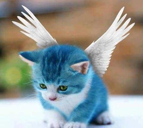 I Want A Blue Cat Fairy Tail Happy Fairy Tail Fairy Tail Cosplay
