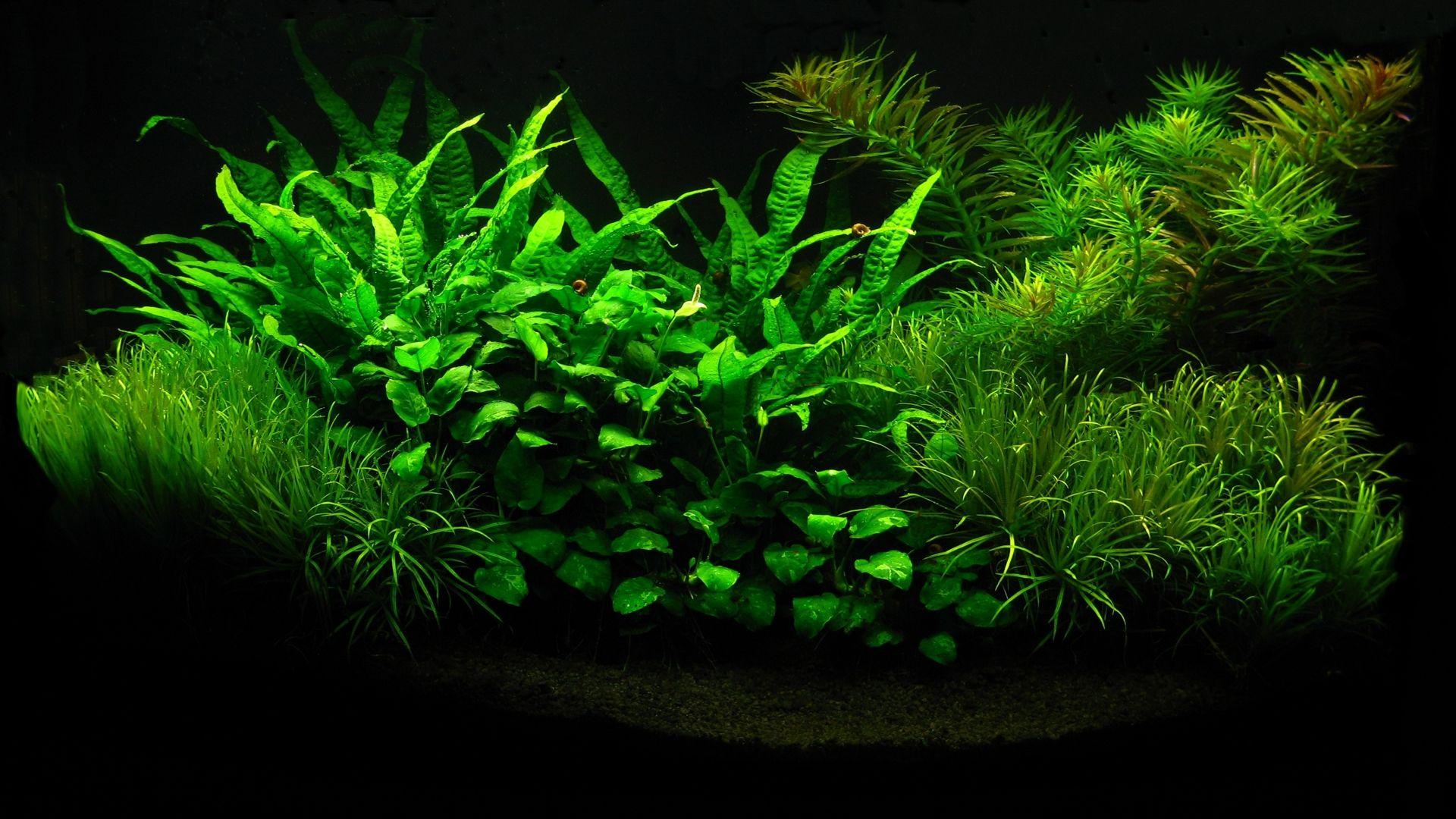 Aquarium Backgrounds Download Free Aquarium Backgrounds Aquarium Design Aquarium