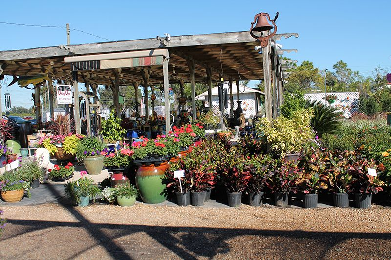 Keep It Green Nursery Landscaping Covers Tampa Bay In Plants Flowers Trees