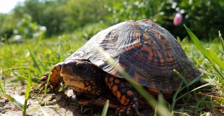 ماذا تأكل السلحفاة وما هي اهم انواعها Animals Turtle