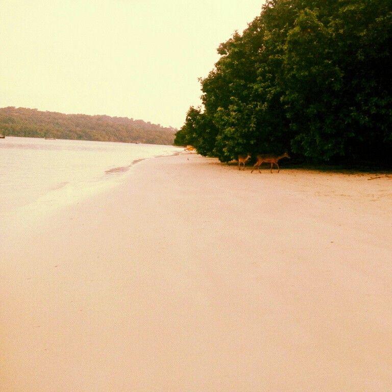 Pulau peucang, Indonesia.