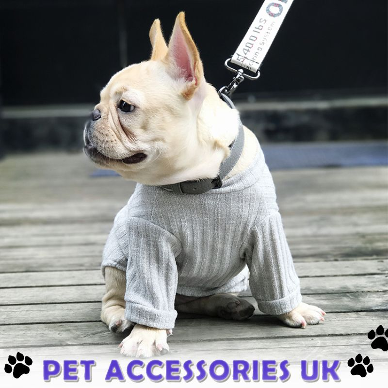 Pin By Compare Market Insurance Uk On Pet Insurance Quotes Cool Pets Pets Pet Insurance Quotes
