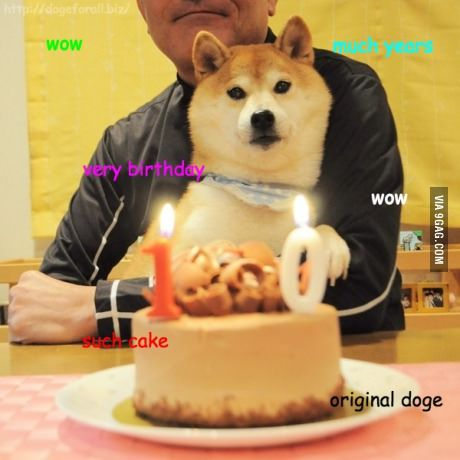 Kabosu Chan The Original Doge Is 10 Years Old Today With